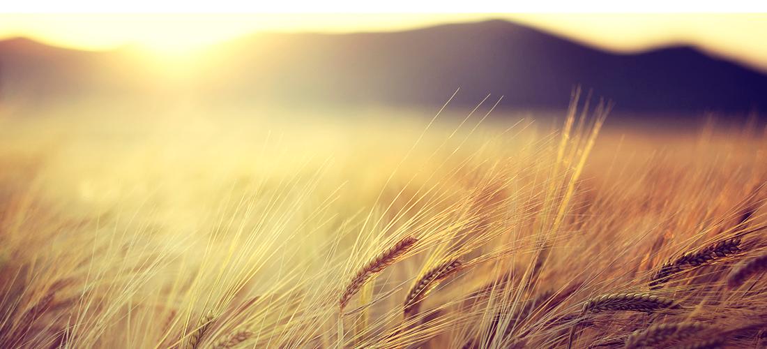 VENTRAJAS DE LA AGRICULTURA ECOLOGICA