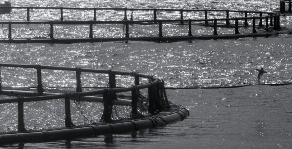 Perspectivas de la producción de alimentos en el medio acuático