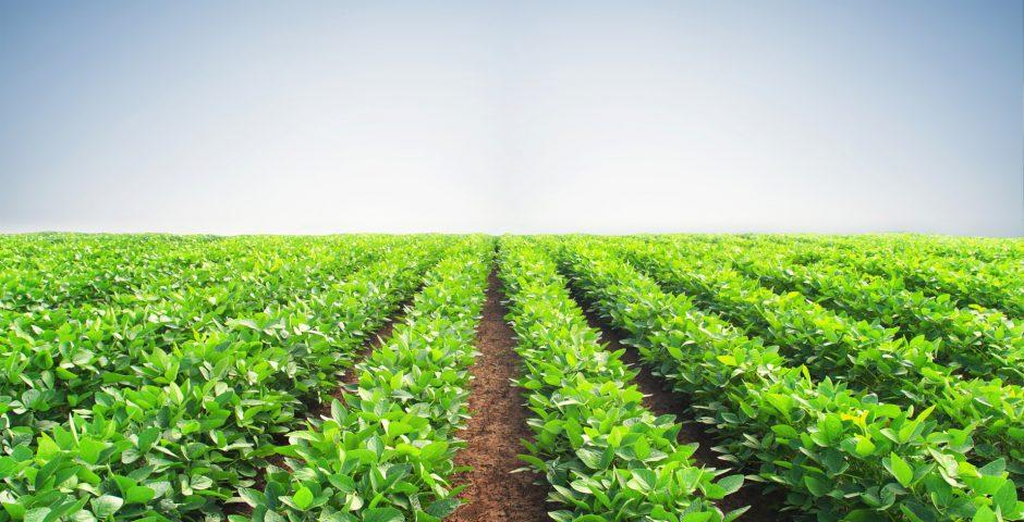 Cuestiones a tener en cuenta para el cultivo eficiente de frutas y hortalizas