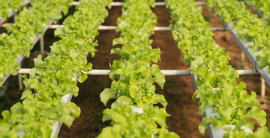 La agroindustria 4.0 marca el camino