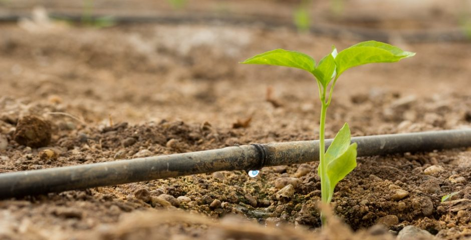 Nuestra agenda de innovación agroalimentaria para 2018