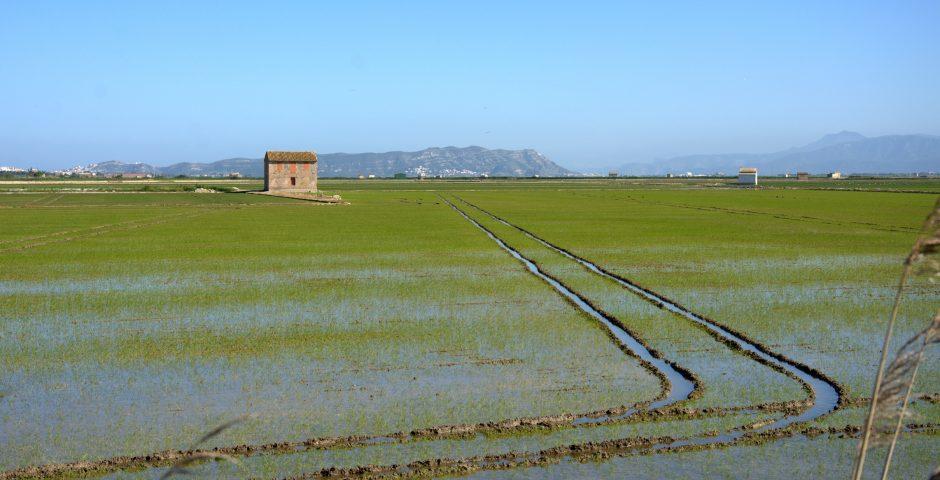 El cooperativismo agroalimentario valenciano se renueva