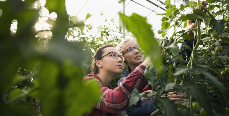 Transformando los destríos agrícolas en coproductos de valor