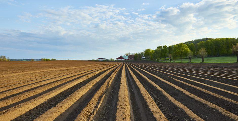 ¿Conocemos la relevancia de los agroinsumos?