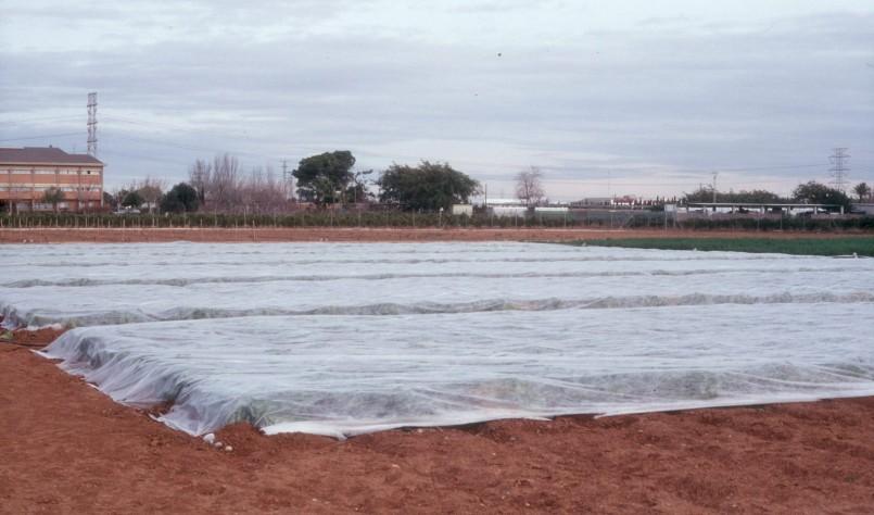 Las consecuencias del cambio climático en la hortofruticultura mediterránea