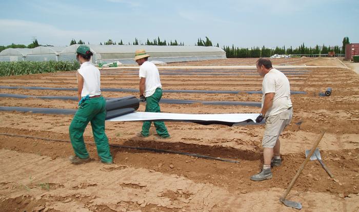 El uso de plásticos en agricultura, el caso de los acolchados