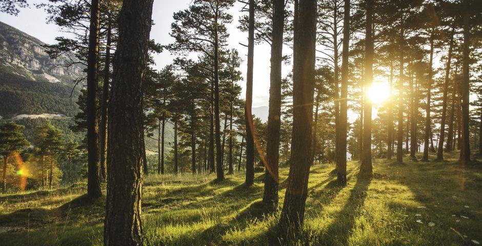 Las diez noticias del año que han marcado el Medio Ambiente