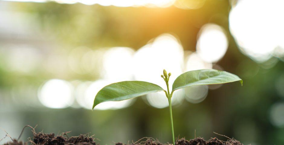 Microorganismos, los aliados de la agricultura sostenible