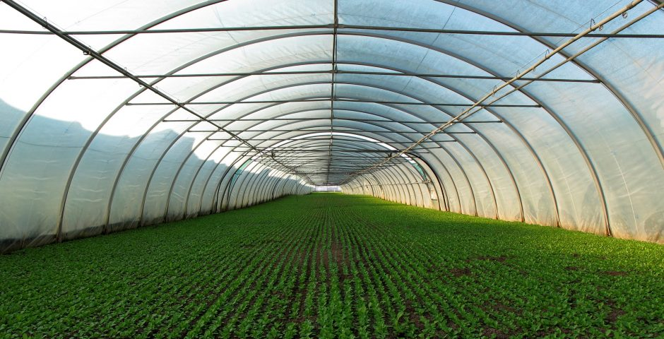 La mejora del clima en invernaderos pasivos