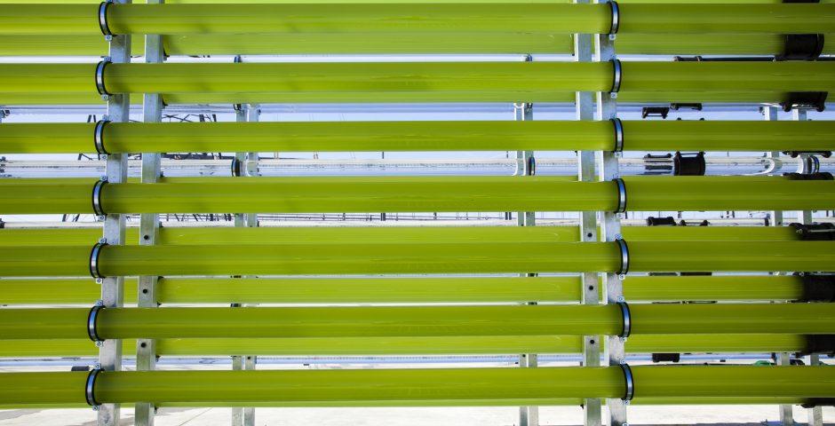 Potencial de las microalgas como alimento