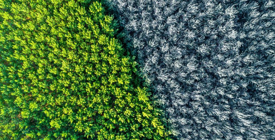 Nuevos cultivos frente al cambio climático