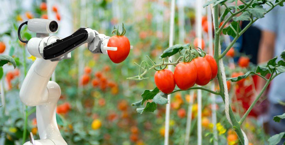 ¿Cómo será la agricultura del futuro?