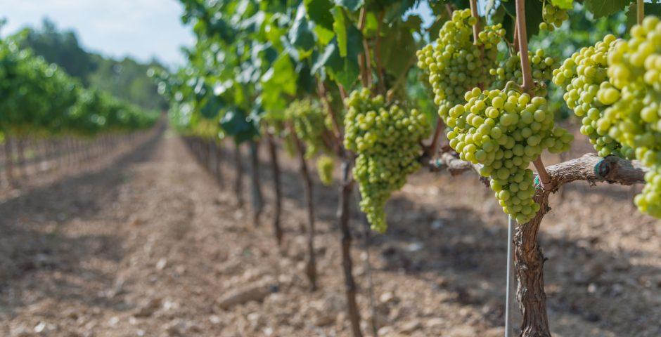 Los desafíos de la industria del vino frente al cambio climático