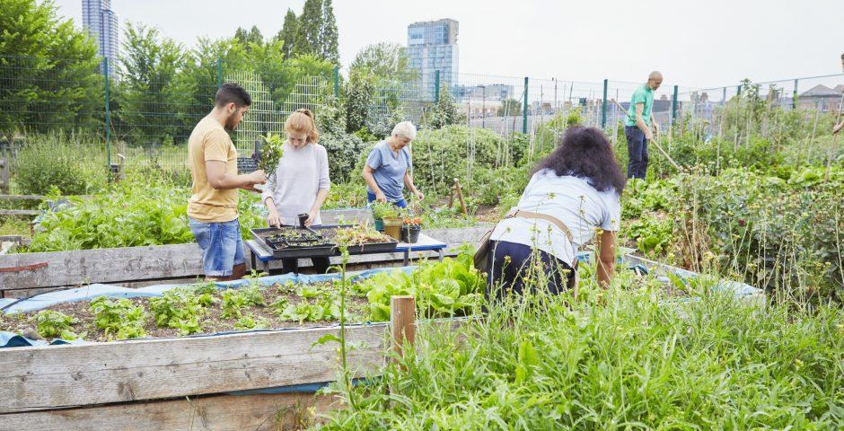 Las ventajas de compartir un huerto urbano para la dieta familiar